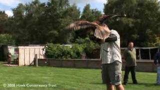 The Official Hawk Conservancy Trust Films Activity Days