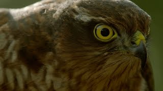 Is Technology Saving Wildlife Films from Extinction?