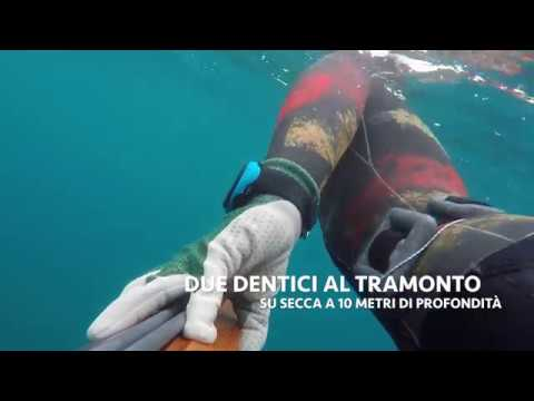 Video in linea senza pesca di registrazione