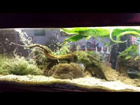 Aquarium Reiniger Test Video