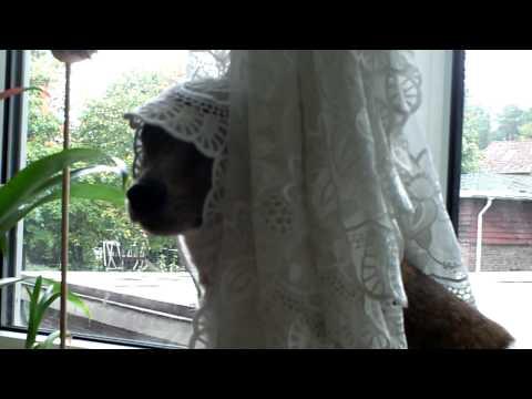 Hund mit Kopftuch?