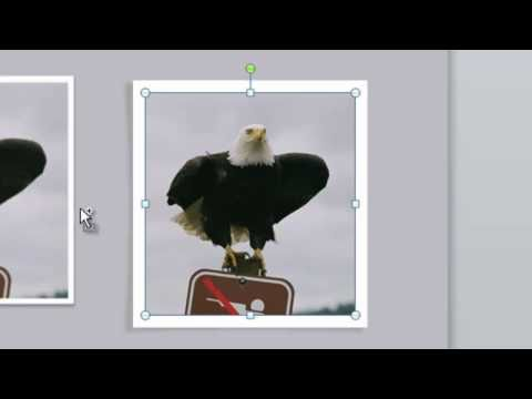 Add A Polaroid-Style Frame To PowerPoint Presentations