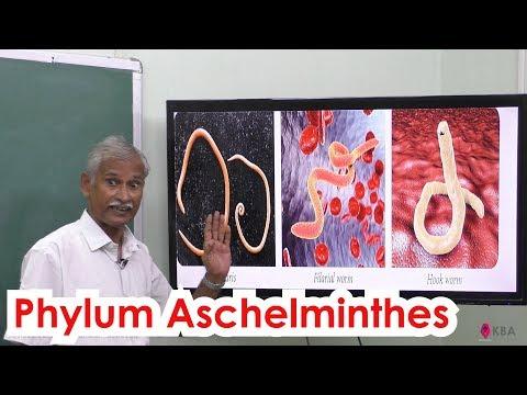 ASD 2 frakció kezelés a paraziták számára