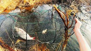 Как ловить вершами в пруду