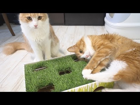 Our cats playing with toys from you guys!! (Plus opening packages)