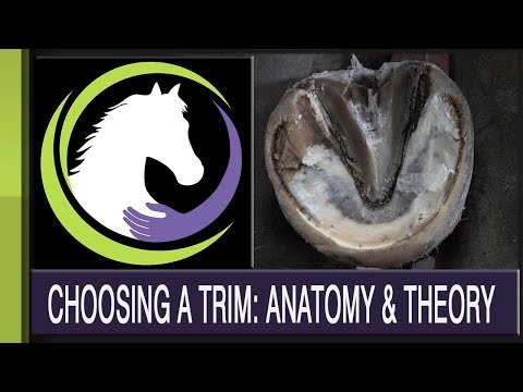 Choosing a Trim: Anatomy & Theory (Part 1 of a 2 part series)