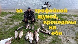 Рыбалок на реке обь