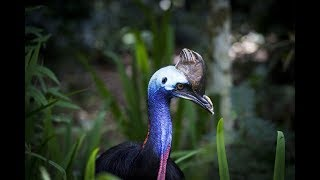 World's Weirdest Bird Sounds - Part One