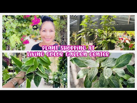 Plant Shopping at Living Color Garden Center || HUGE HOYA PUBICALYX SPLASH BASKETS $29.99!!!