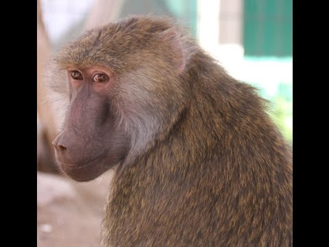 Help Rescued Monkeys in Arizona