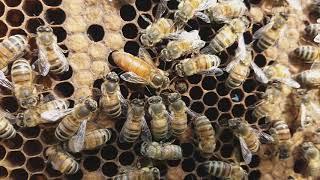 Пчеловодство.Немного релакса в ленту!