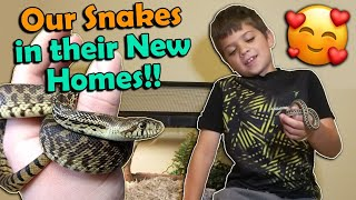 Where are our Baby Snakes Now? Fans Send Updates! by Snake Discovery