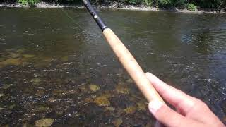 Tenkara Fly Fishing on the Ottawa River