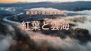 紅葉と雲海新潟県津南町4K空撮DJIドローン