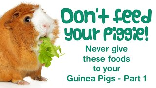 What FOODS Can Guinea Pigs NOT Eat? | POISONOUS & TOXIC Weeds, Plants | BAD Pet Foods