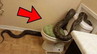 Ova porodica je pronašla zmiju u svojoj kući, ali to je bio tek početak horora