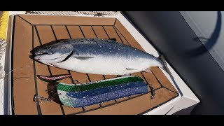 Форумы о рыбалке владивосток
