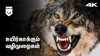 How to Survive Wild Animal Attacks? | Tamil | Navin Shimmer