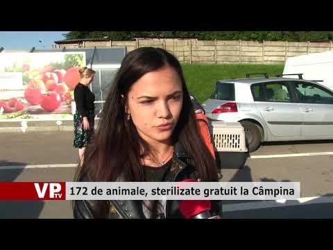 172 de animale, sterilizate gratuit la Câmpina