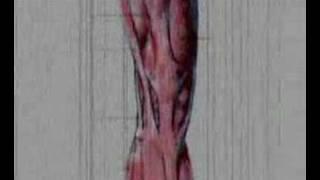 Artrosis - Wiem