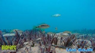 Snorkel En El Lago Malawi 4