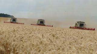 EXTREME SLOVAKIA HARVEST 2018 - DONAU FARM - 3x Claas Lexion, 7x John Deere