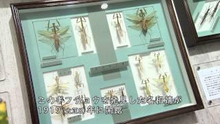 岐阜市良いとこ知っとこ「名和昆虫博物館編」