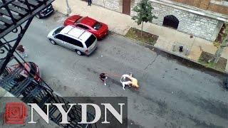 My-CaribbeanRadio com - Caught On Camera: Pitbulls violently attack