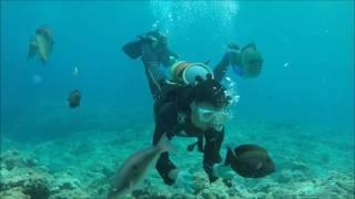 沖縄 青の洞窟 体験ダイビング Gopro