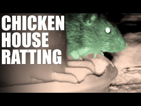 Pellet Power & Performance – Chicken House Ratting