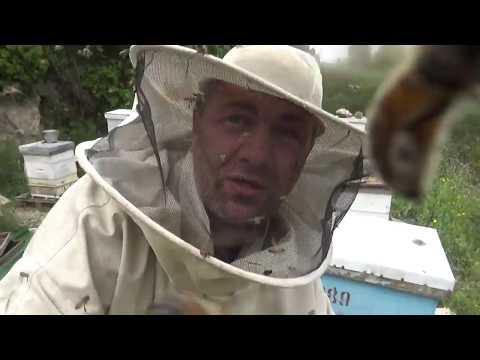 пчела озверела , я в шоке .побег  от пчёл с двухматочным содержанием