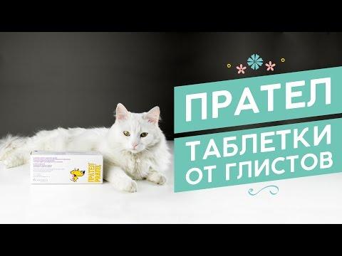 Внутренние паразиты у котов