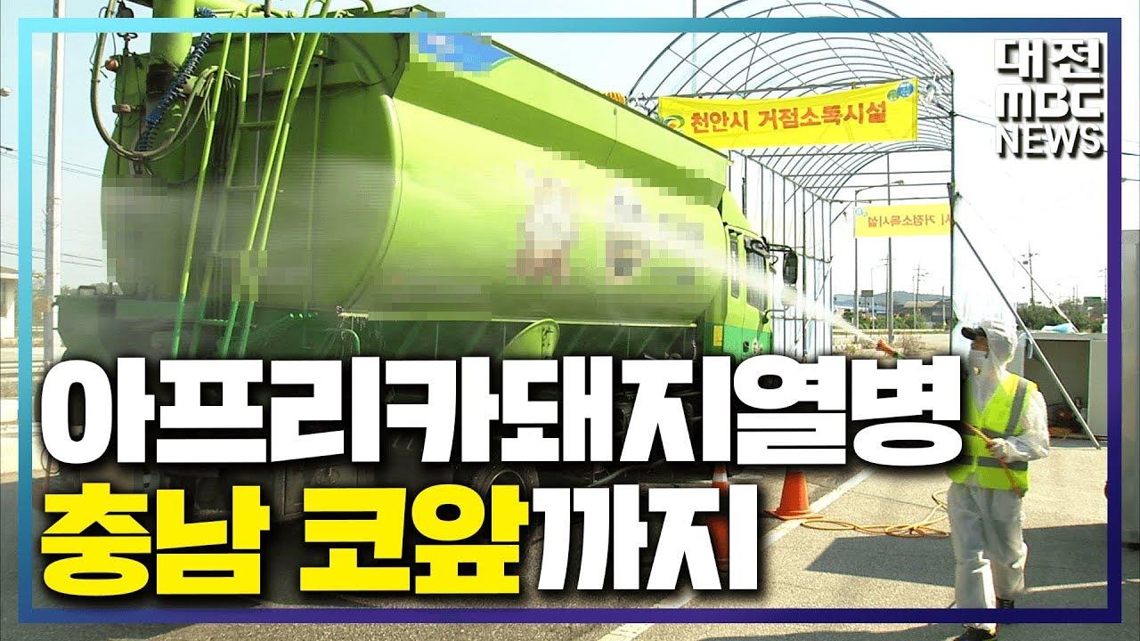 [리포트]ASF '충남 코 앞'까지 위협