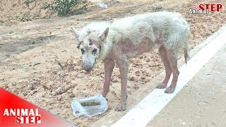Watch Until the End! An Amazing Makeover of Poor Stray Dog