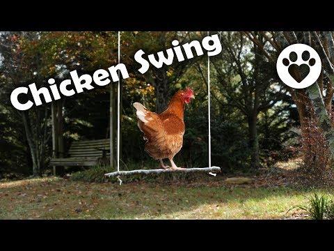 , title : 'DIY Chicken Swing