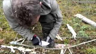 Добывание огня в сыром лесу