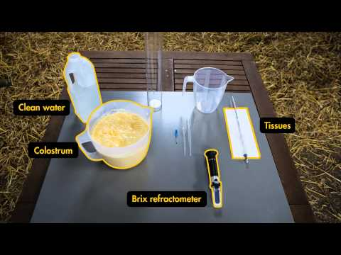 Testing colostrum - brought to you by AHDB Dairy