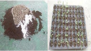 Nursery's Secret: Best Mix For Starting Seeds