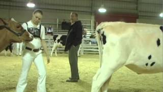 Udder perfection: judging dairy cows