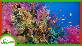 The Stressful Reasons Corals Are Becoming More Colorful