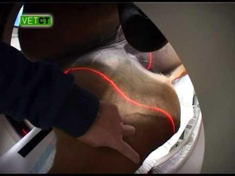 Rückenschmerzen im Lendenbereich in der Rückenlage
