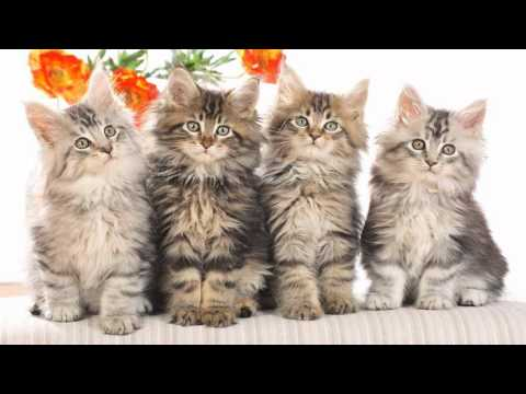 Cute Cats Pictures, Images & Photos | Cute Animals