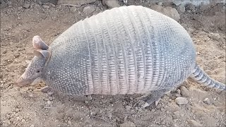 Armadillo** Better-Than-A-Classroom-Edutainment-Session