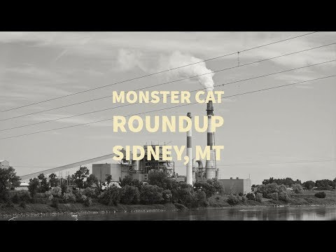 Monster Cat Roundup 2017