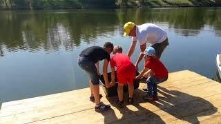 Выпускаем рыбок в пруд.