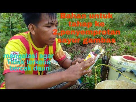 A paraziták étrendjének tisztítása
