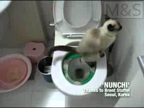 Litter Kwitter  Sistema de entrenamiento para gatos - Subtitulado
