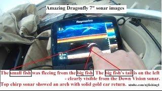 Raymarine e70320 dragonfly-7 pro sonar gps
