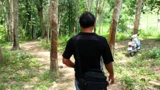 preview picture of video '[ TEA POT ] สำรวจเขาจำปา ( ถ้ำ )'