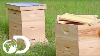 BEEHIVE | How It's Made